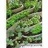棚田状のリーフ花壇。たくさんの種類を少しづつ楽しめますね。