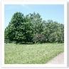 同じような樹木の中に 新しい樹木が