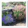 水はけを考えて ハイライズの花壇にしてあるのでしょうか。