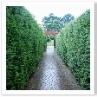 西と東の2つの庭の境にある 生垣。シシングハーストを思い出す。