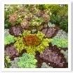 多肉植物で作られています。様々な葉の色が楽しめますね。