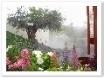 樹齢800年のオリーブと石を用いた幻想的な庭。
