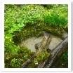 ヤマブキ、ツワブキ、菜の花・・・小川の周りには緑が溢れています。