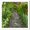 自然石を使用した園路。雨で濡れると風情UPです。