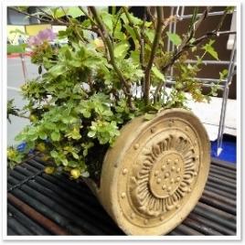 瓦を器にした盆栽
