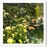 黄色のビタミンカラーお庭。元気が出そうですね。