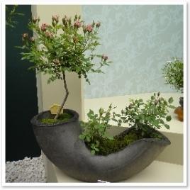 やはり盆栽はバランスが大切ですね。