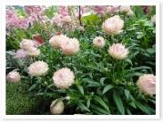 もちろん花が主役のお庭なので、お花もキレイ!