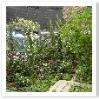 全てをバラ科の植物で作った庭。バラ、サクラ、イチゴ、ワレモコウ・・・いろんな種類があるのですね。