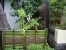 竹穂と青竹の色のコントラストが魅力的