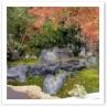 自然のままの形を生かした石とコケの緑、紅葉したモミジの紅が綺麗です