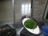 苔玉によるインドアグリーン・和モダン