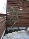 玄関アプローチ(ウリンフェンスと乱形石のコラボレーション) 施工