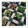 レンガで仕切った家庭菜園。アイディアです。
