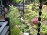 和風・庭まわり 施工例5