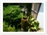 手水鉢  方丈南庭側