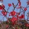 ボケ(木瓜)の花。ミニガーデン付近に咲いてました。