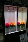 気になったのはこちら。彩光色LED。食材やインテリア、植栽を美しく引き立てるLED照明シリーズ「美ルック」と同系の技術を使ったシリーズ。お花本来の色も色鮮やかに表現できます。