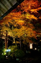 龍潭寺 紅葉まつり・秋の寺宝展 夜間特別公開11 /
